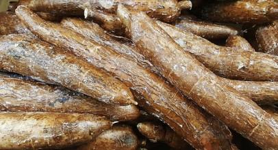 Cassave koken